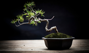 What is Bonsai ?